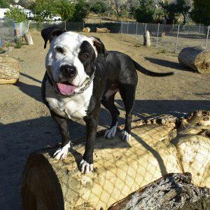 HoundTown_Happy_Dog